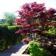 Japansetuin1
