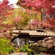 Japansetuin3